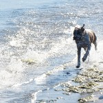 dog friendly cottage holiday north devon