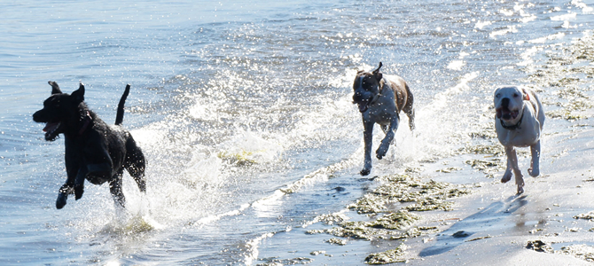 Pet friendly holiday cottages with Dune Cottage holidays